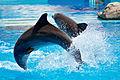 Dolphin show in Lisbon Zoo 02.jpg