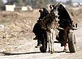 Donkey cart, Abu Atham Iraq.jpg