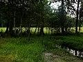 Drzewa wzłuż strumyka - panoramio.jpg
