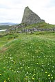 Dun Carloway and flowers - geograph.org.uk - 922593.jpg