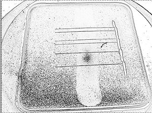 Solar cell efficiency - Dust often accumulates on the glass of solar modules - highlighted in this negative image as black dots - which reduces the amount of light admitted to the solar cells