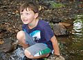 Each summer one of the most popular programs at Hungry Mother State Park is the Critter Crawl where the participants investigate what lives in a creek at the park. - AA (18933176069).jpg