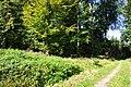 Eglisau - Rhinsberg, spätbronzezeitliche Höhensiedlung - neuzeitliche Hochwacht 2011-09-21 13-32-14.JPG