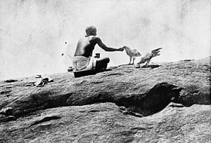 Vedagiriswarar temple - Sacred vultures fed by temple priests at Thirukalukundram, 1906