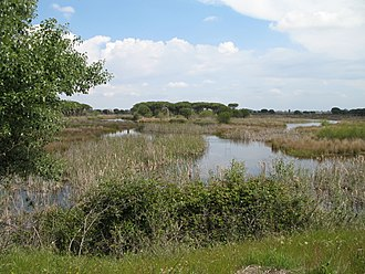 Doñana National Park - View of Doñana National Park from visitors' centre at El Acebuche
