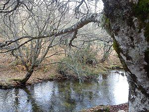 El Bosque de las Hadas (Hayedo de Montejo).jpg