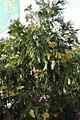 Eleouthkia Traditional and Botanical Park, Cyprus - panoramio.jpg