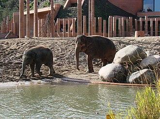 Copenhagen Zoo - Image: Elephants Zoo Copenhagen