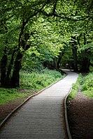 Elevated wooden woodland path in Hatfield Forest Essex England.jpg