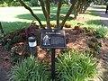 Elizabethan Gardens, Fort Raleigh National Historic Site, Manteo, Roanoke Island, North Carolina (14480562843).jpg
