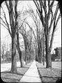 Elms n walk – Genesee St., Syracuse, NY (5168252530).jpg