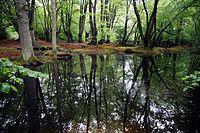 Epping Forest High Beach Essex England - spring pond 03.jpg