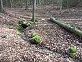 Ergiebige Waldquelle.jpg