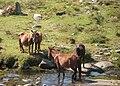 Escena maternal de barbanzóns, serra do Barbanza.jpg