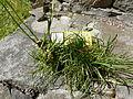 Etrange plante5.JPG