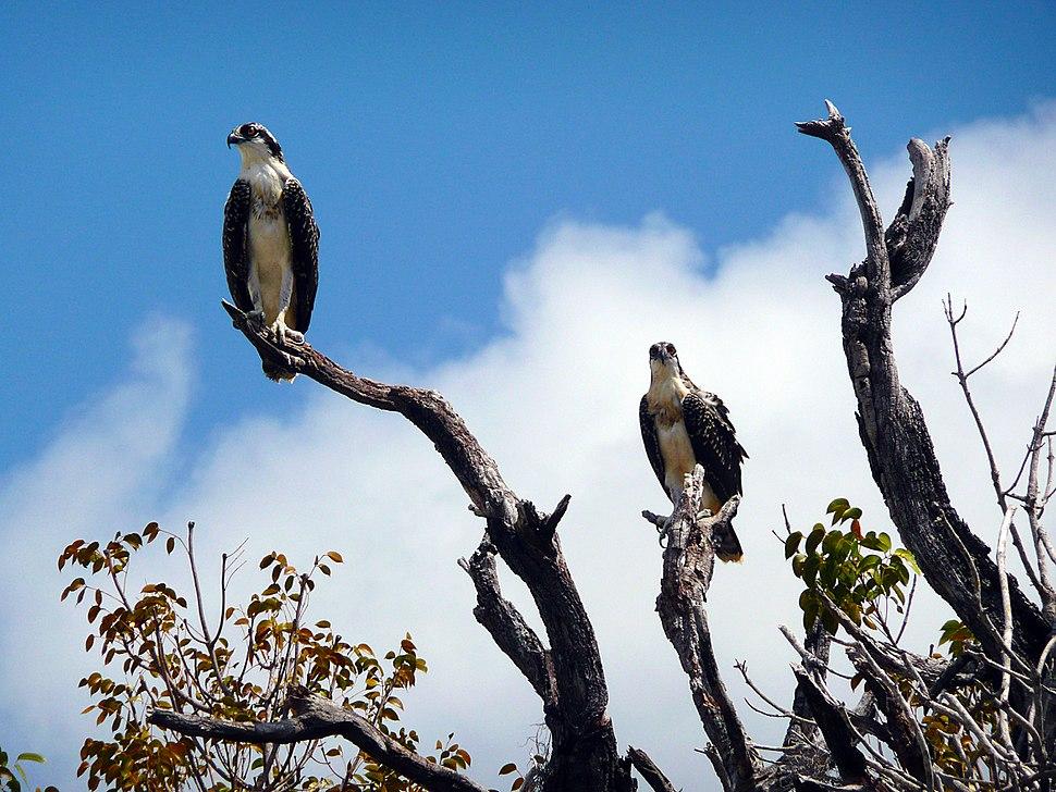 Everglades National Park-108142