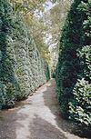 exterieur tuinpad met coniferenhaag - berkel-enschot - 20001223 - rce