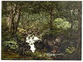 Fairy Glen Waterfall, Penmaenmawr, Wales LOC 3751628343.jpg