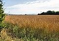 Farmland, Pylewell - geograph.org.uk - 1431825.jpg