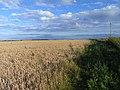 Farmland above Compton - geograph.org.uk - 1558778.jpg