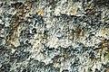 Fault slickenside (Great Smoky Mountains, Tennessee-North Carolina, USA) 3.jpg