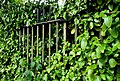 Fence and hedge, Botanic Gardens, Belfast - geograph.org.uk - 1945083.jpg