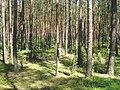 Feromon trap lymantria monacha 1 beentree.jpg
