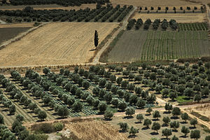 Agriculture in Greece - Valley of Messara, Crete