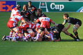 File-ST vs Gloucester - Match - 8809.JPG