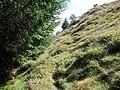 Final ascent to Foel y Geifr - geograph.org.uk - 229920.jpg