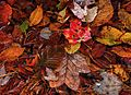 Floating-leaves - Virginia - ForestWander.jpg