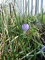 FloraHilden (7).JPG