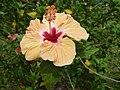 Flower - panoramio - georama (2).jpg