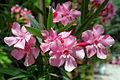 Flower 108 (9669990697).jpg