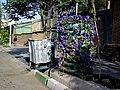 Flower in iran گل و هنرستان فنی - panoramio.jpg