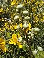 Flowers - Fiori (17503337943).jpg