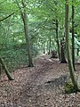 Footpath in Birch Wood - geograph.org.uk - 2499258.jpg