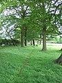 Footpath through the Trees - geograph.org.uk - 189679.jpg