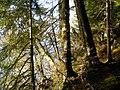 Forest (3049761098).jpg