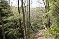 Forest in Mt.Myo 01.jpg