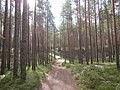 Forest road near Luitemaa nature preserve - panoramio.jpg