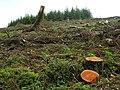 Forestry Scene - geograph.org.uk - 1390502.jpg