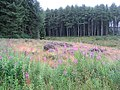 Forestry at Ravenburn - geograph.org.uk - 530448.jpg