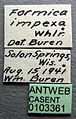 Formica impexa casent0103361 label 1.jpg