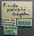 Formica planipilis casent0103234 label 1.jpg