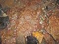 Fossils in ferruginous siliciclastics (Vinton Member, Logan Formation, Lower Mississippian; Irish Ridge East roadcut, near Trinway, Ohio, USA) 3 (33194995306).jpg