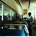 Fotothek df n-34 0000031 Facharbeiter für Datenverarbeitung.jpg