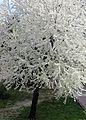 Frühling im Ermstal - panoramio.jpg