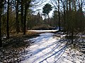 Friston Forest near Exceat - geograph.org.uk - 131905.jpg