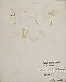 Fungi agaricus seriesI 029.jpg